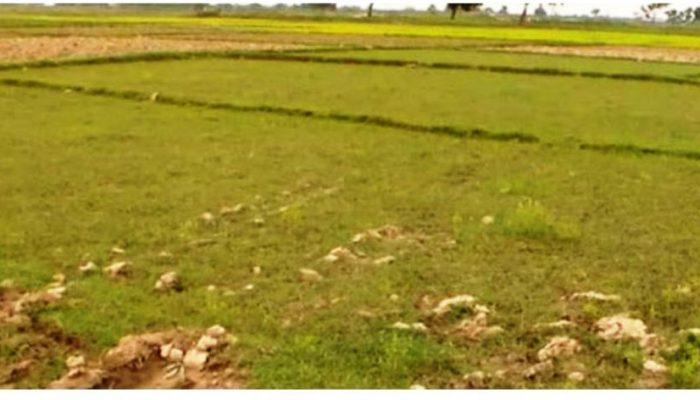 नेपालमा आठ लाख हेक्टर जमीन सिँचाइबाट वञ्चित